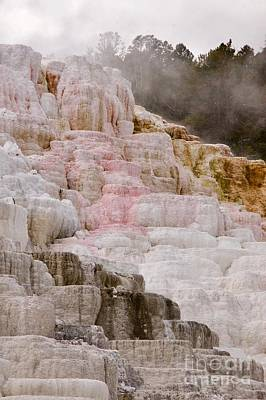 Photograph - Mammoth Hot Springs by Sean Griffin