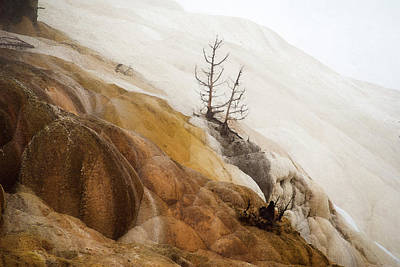 Photograph - Mammoth Hot Springs by Yulia Kazansky