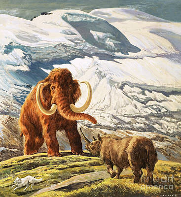 Rhinoceros Painting - Mammoth Meets Rhinoceros by Eric Tansley