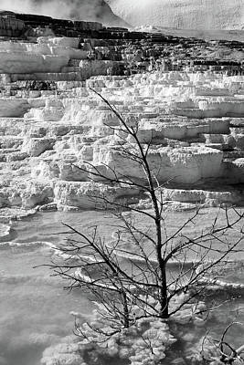 Photograph - Mammoth Springs, Upper Terrace 36 by Jeff Brunton