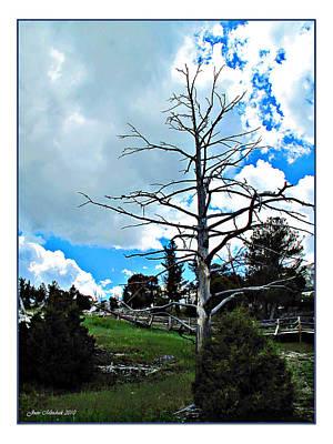 Photograph - Mammoth Tree by Joan  Minchak