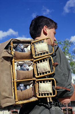 Man Carrying Carrier Pigeons On Back Art Print