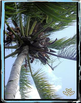 Photograph - Man In Palm Tree by Jane Gordon