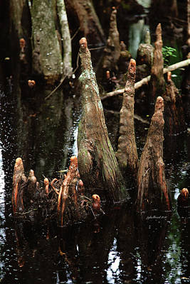 Photograph - Man Of The Swamp by Joseph G Holland