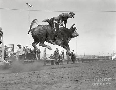 Photograph - Man On Bucking Bull, C.1950s by H. Armstrong Roberts/ClassicStock