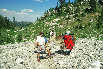 Llama Photograph - Man Posing With His Llama High Mountain Pass by Jerry Voss
