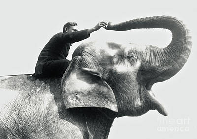 Cute. Sweet Photograph - Man Riding An Elephant  by Frederick William Bond