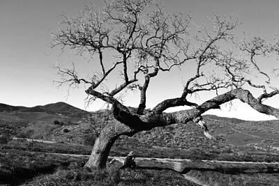 Photograph - Man Thinking Under Tree - Black And White by Matt Harang