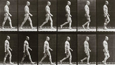 1887 Photograph - Man Walking, Plate 6 From Animal Locomotion, 1887  by Eadweard Muybridge