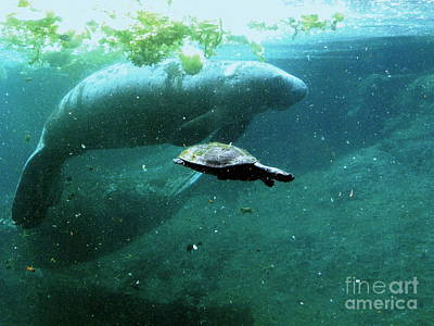 Photograph - Manatee And Sea Turtle by Terri Mills