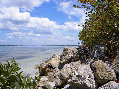 Sand Wall Art - Photograph - Manatee River by Ric Schafer