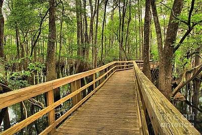 Photograph - Manatee Springs Boardwalk by Adam Jewell