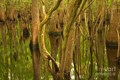 Photograph - Manatee Springs Cypress Reflections by Adam Jewell