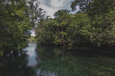 Photograph - Manatee Springs by Robin Blaylock