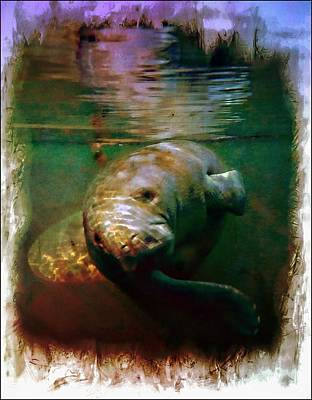 Photograph - Manatee Turn by Sheri McLeroy