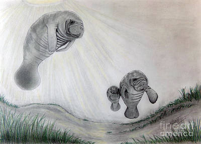 Drawing - Manatees by Kami Catherman
