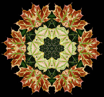 Photograph - Mandala Autumn Star by Nancy Griswold