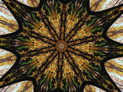 Photograph - Mandala Of Autumn Trees. by Wendy Le Ber