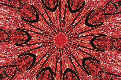 Photograph - Mandala Of Autumn Woods by Wendy Le Ber