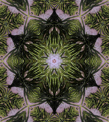 Digital Art - Mandala Sea Sponge by Nancy Griswold