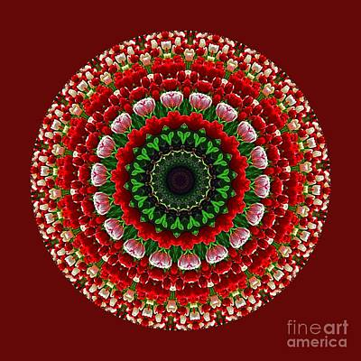 Photograph - Mandala Tulipa By Kaye Menner by Kaye Menner