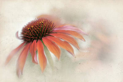 Photograph - Mandarin Cone Flower by David and Carol Kelly