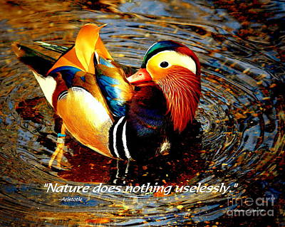 Photograph - Mandarin Duck - Paintograph With Aristotle Quotation by Christine S Zipps