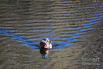 Photograph - Mandarin Duck 20131218_278 by Tina Hopkins