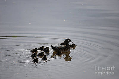 Mandarin Duck And Babes 20130508_227 Art Print