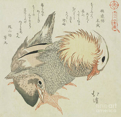 Mandarin Drawing - Mandarin Duck And Drake by Toyota Hokkei
