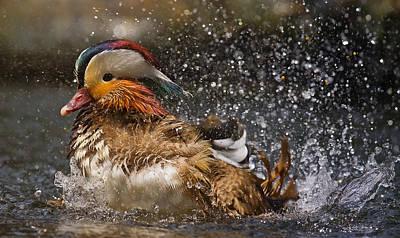 Duck Photograph - Mandarin Duck by C.s.tjandra