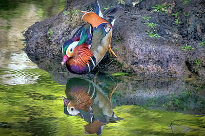 Photograph - Mandarin Duck by Nadia Sanowar