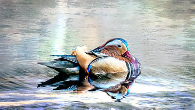 Drawing - Mandarin Duck On The  Pond - Sketch by Ericamaxine Price