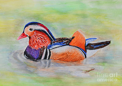 Painting - Mandarin Duck Watercolor Painting by Olga Hamilton