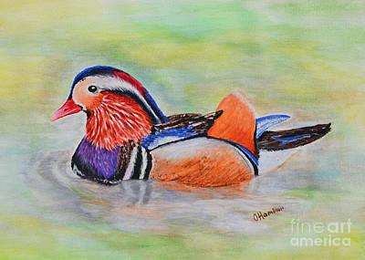 Painting - Mandarin Duck Watercolor Painting by Olga Hamilton