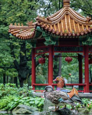 Photograph - Mandarin Ducks At Pavilion by Michael Niessen