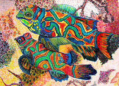Mandarin Drawing - Mandarin Fish by Patricia Merewether