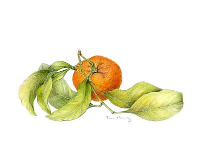 Vegetable Market Drawing - Mandarin Orange by Fran Henig