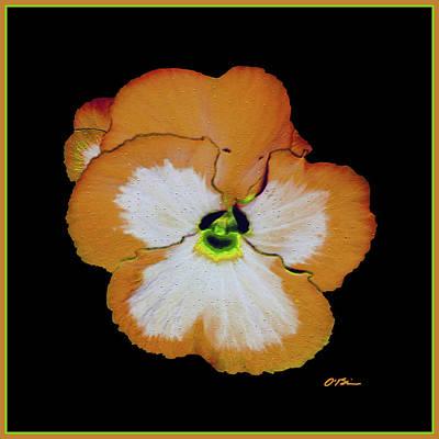 Mandarin Pansy Art Print