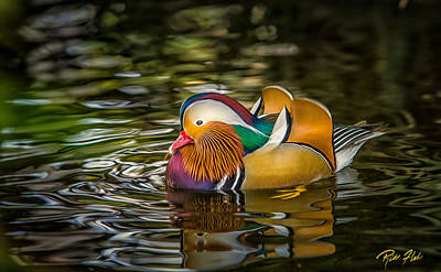 Photograph - Mandarin Rainbow by Rikk Flohr
