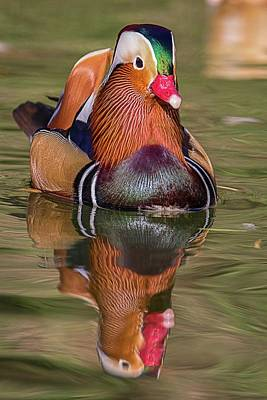 Photograph - Mandarin Reflection by Teresa Wilson