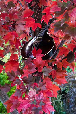 Photograph - Mandolin Autumn by Mick Anderson