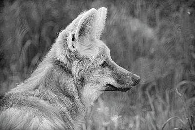 Photograph - Maned Wolf Black And White by Steve McKinzie