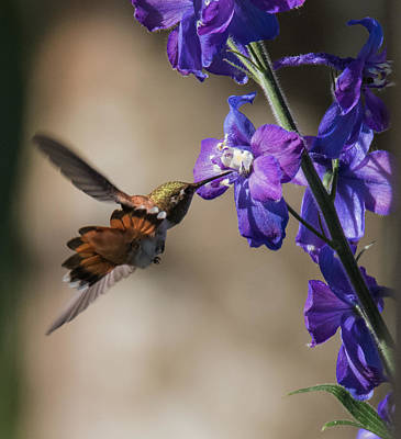 Photograph - Maneuvering Around The Delphinium by Angie Vogel
