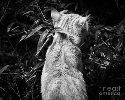 Photograph - Mango by Patrick M Lynch