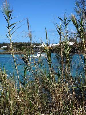 Red Roses - Mangrove Bay by Ian  MacDonald