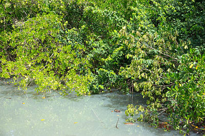 Photograph - Mangrove Botanicals by Daniel Jean-Baptiste