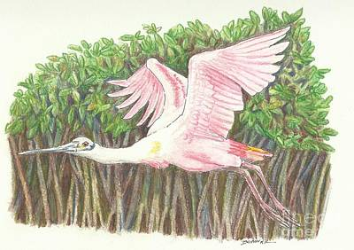 Spoonbill Drawing - Mangrove Flyer by Sue Bonnar