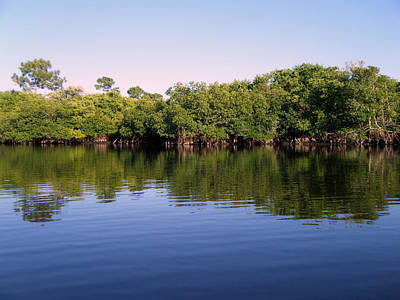 Mangrove Forest Art Print by Steven Scott