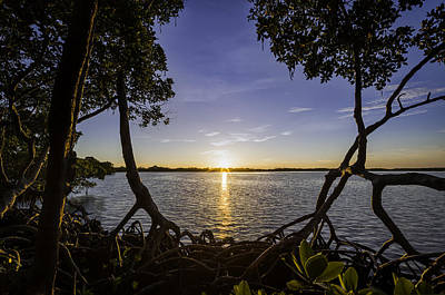 Photograph - Mangrove Frame by Nick  Shirghio